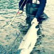 Salmon fishing Eira River